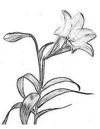 flower coloring pages 12 printable coloring pages