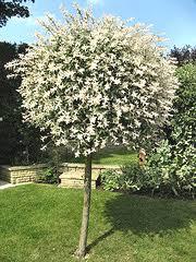 pruning ornamental trees garden landscape ideas