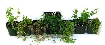 garden design garden design with neherp artificial plants uamp