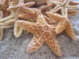 Starfish Home Decor Mini Sugar Starfish 1 2