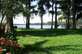 Hammock Backyard Lakes Hammock Trees Lake Cypress Flowers Backyard Florida