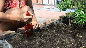asian woman planting organic vegetable in home garden stock