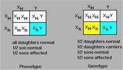 inheritance pattern quizlet red green color blindness is inherited as an x linked recessive