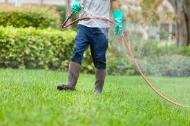 Ticks In Backyard Ways To Avoid Or Kill Deer Ticks
