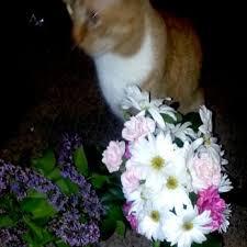 flowers wi flowers on florists 305 st e menomonie wi phone