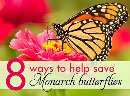 monarch on clover inhabitat green design innovation