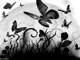 1364 black butterfly hd wallpaper walops com