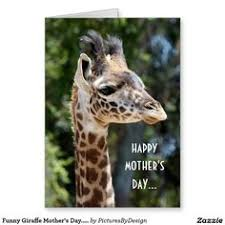 s day giraffe baby giraffe poster cutiness so adorable animals