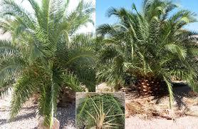 how to make a tree centerpiece pineapple palm wedding ideas magazine