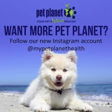 american eskimo dog calgary pet planet crowfoot corner home facebook