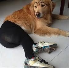 Pantyhose Meme - dogs wearing pantyhose meme 10 coolness pinterest dog