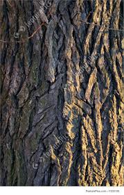layered tree bark detail stock image i1233150 at featurepics
