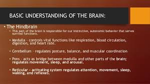Part Of Brain That Controls Arousal Chapter 7 The Brain