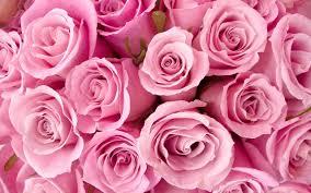 Vs Pink Wallpaper by Vs Pink Wallpaper Download Wallpaper