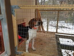 dog kennels belding u0027s country oaks beagles