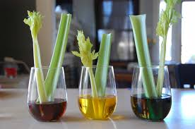 celery science experiment tinkerlab