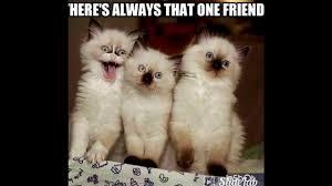 Kittens Memes - cat memes and kawaii kittens youtube