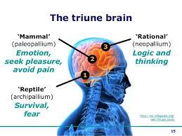 Role Of Brain Stem Best 20 Triune Brain Ideas On Pinterest Function Of Brain What