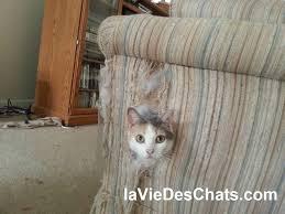 un persiste à faire ses griffes sur les meubles que faire