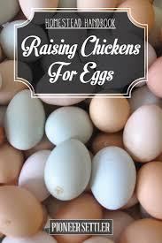 raising chickens for eggs homestead handbook