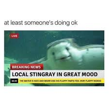 Stingray Meme - dopl3r com memes at least someones doing ok live breaking news
