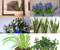 Best Plants For Bedroom Air Purifying Plants For Bedroom Air Diy Home Plans Database