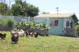 the old fashioned way the basics of poultry keeping