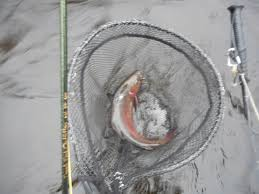 black friday fishing millers swift ware and eb fly fishing forum welcome to trout