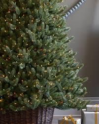 vermont white spruce narrow tree balsam hill christmas