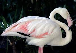 6 of the world u0027s longest lived animals u2013 national geographic