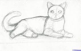realistic cat drawing 10 best images about furballs on pinterest