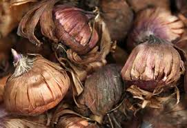 how to plant fall bulbs planet natural