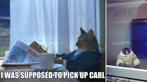 Cat Buy A Boat Meme - pick up carl i should buy a boat cat know your meme