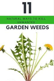 garden weed killers 11 natural ways to get rid of weeds for good