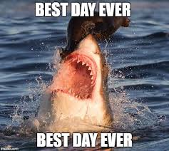 Best Day Ever Meme - travelonshark meme imgflip
