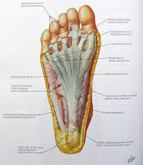 Foot Vascular Anatomy 25 Best Foot Anatomy Images On Pinterest Foot Anatomy Foot Pain