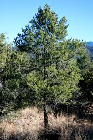 native plants of new mexico 197 best high desert plants u0026 trees images on pinterest desert