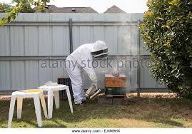 Backyard Beehive Honey Backyard Beekeeping Stock Photos U0026 Honey Backyard Beekeeping