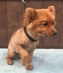 20 Great Dog Walks Around Sydney And Central Coast Australian Pomeranian Dogs U0026 Puppies For Sale In Australia Home Facebook