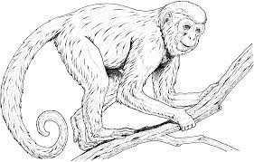 spider monkey clipart line drawing pencil and in color spider