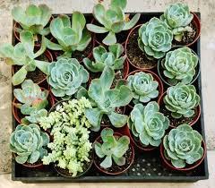 happier houseplants how to keep indoor plants healthy apartment