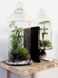 the urban grow u2013 terrarium