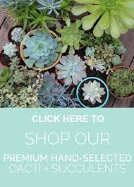 28 propagating succulents needles leaves propagating propagating succulents needles leaves propagating succulents needles leaves
