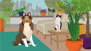 houseplants safe for cats and dogs fix com