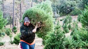 up the hill to a christmas tree farm sacramento valley