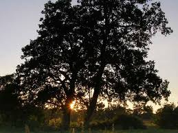 celtic calendar and astrology was based on trees irishcentral