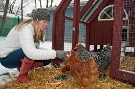 Backyard Chickens 101 by Backyard Chickens 101 Edible Cleveland