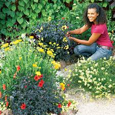 how to design a color flower garden planting gardens and flower