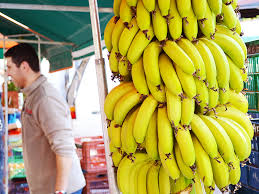 farmers in crete of greece are growing bananas in small scale