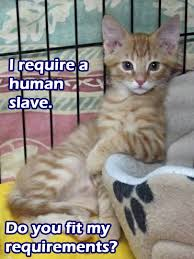 Mango Meme - mango memes the cat corner s rescue kitties